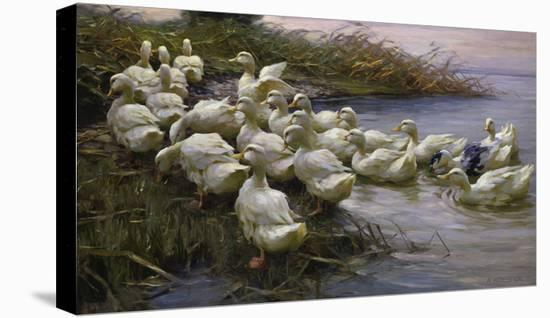 Ducks on the Lakeshore-Alexander Koester-Stretched Canvas Print