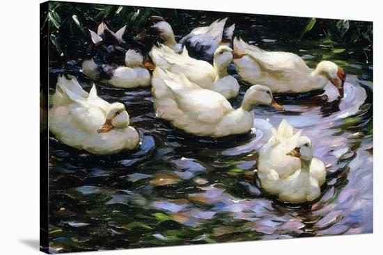 Ducks Swimming in a Sunlit Lake-Alexander Koester-Stretched Canvas Print