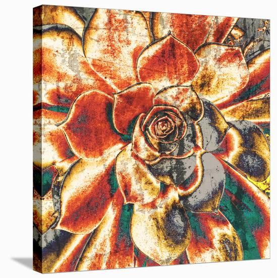 Echeveria Elegans--Stretched Canvas Print