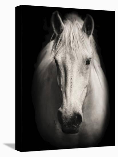 Equus 1-THE Studio-Stretched Canvas Print