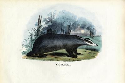 European Badger, 1863-79-Raimundo Petraroja-Stretched Canvas Print