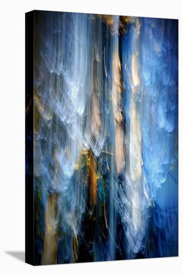 Evening Trees 1-Ursula Abresch-Stretched Canvas Print