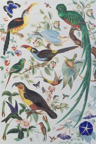 Exotic Parrots, c.1850-John James Audubon-Stretched Canvas Print