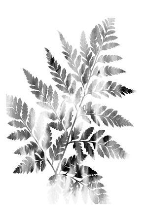 Faded Fern-Sheldon Lewis-Stretched Canvas Print