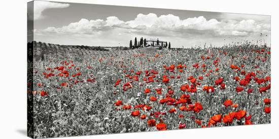 Farm house with cypresses and poppies, Tuscany, Italy-Frank Krahmer-Stretched Canvas Print