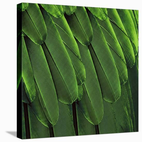 Feathered Friend - Green-Julia Bosco-Stretched Canvas Print