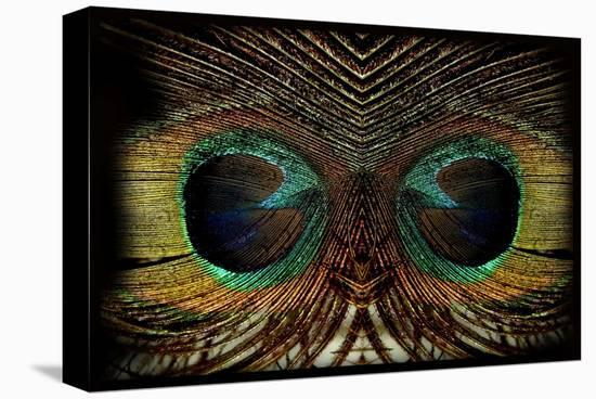 Feathered Owl-Jan Michael Ringlever-Stretched Canvas Print