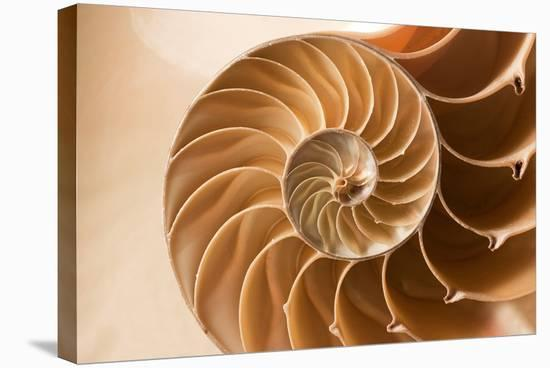 Fibonacci Pattern in a Shell--Stretched Canvas Print