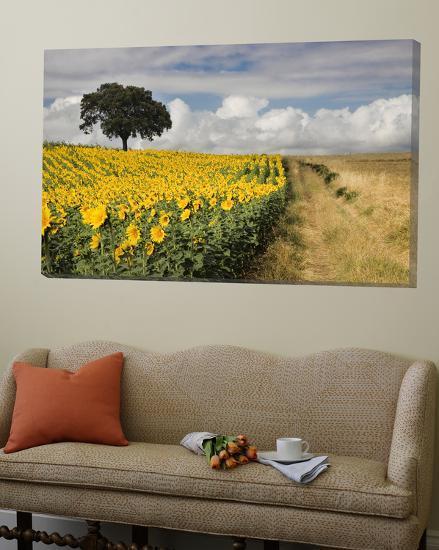 Field of Sunflowers with Holm Oaks-Felipe Rodriguez-Loft Art
