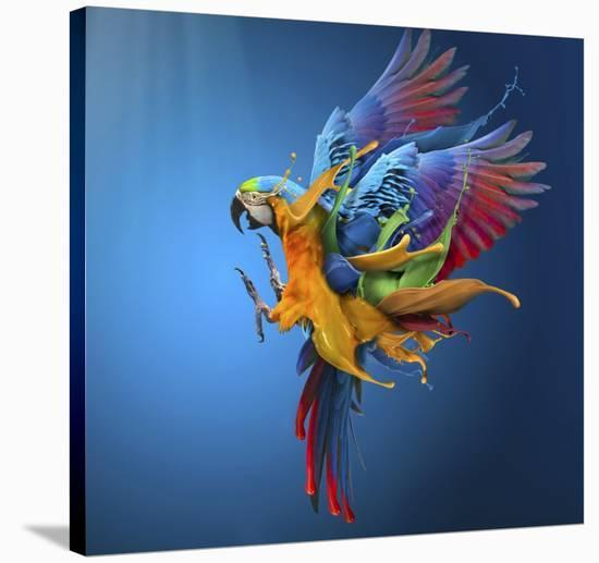Flying Colours-Sulaiman Almawash-Stretched Canvas Print