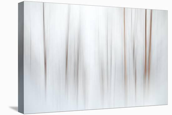 Fog-Ursula Abresch-Premier Image Canvas