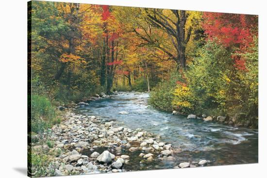 Forest Creek--Stretched Canvas Print