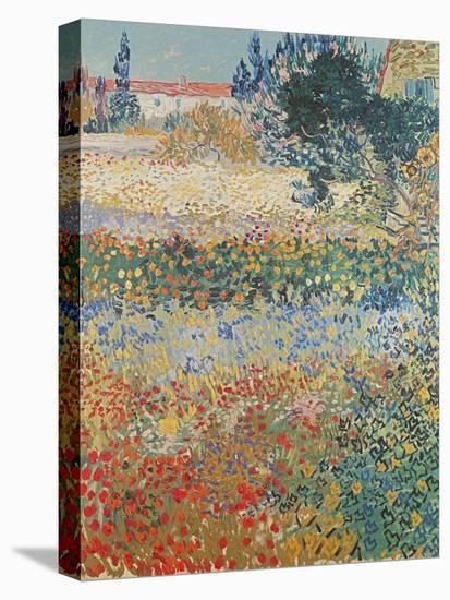 Garden in Bloom Arles, c.1888-Vincent van Gogh-Stretched Canvas Print
