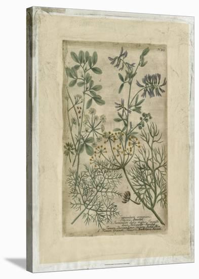 Garden Varietals IV-Johann Wilhelm Weinmann-Stretched Canvas Print