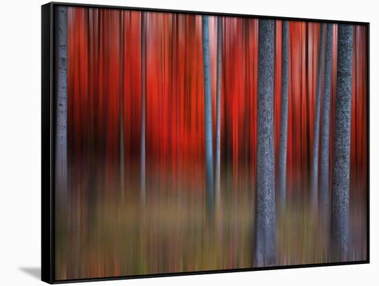 Gimick-Philippe Sainte-Laudy-Framed Canvas Print