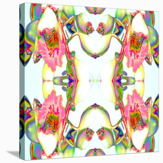Ginger2-Rose Anne Colavito-Stretched Canvas Print