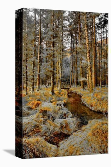 Gougane Barra Stream-Jan Michael Ringlever-Stretched Canvas Print