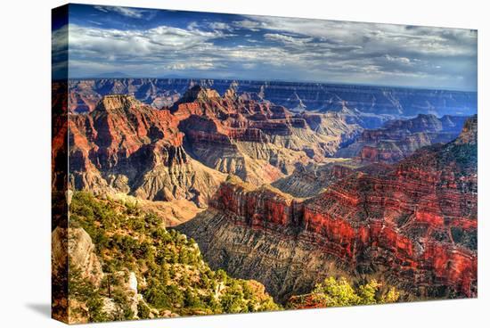 Grand Canyon North Rim Arizona--Stretched Canvas Print