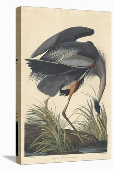 Great blue Heron, 1834-John James Audubon-Stretched Canvas Print