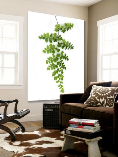 Green Maidenhair-Lexie Greer-Loft Art