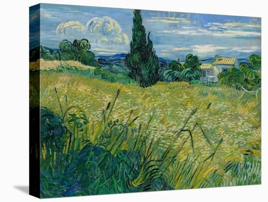 Green Wheat, 1889-Vincent van Gogh-Stretched Canvas Print