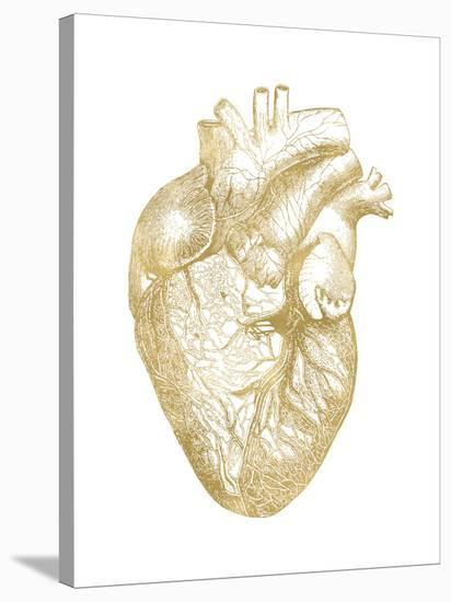 Heart Anatomical Golden White-Amy Brinkman-Stretched Canvas Print