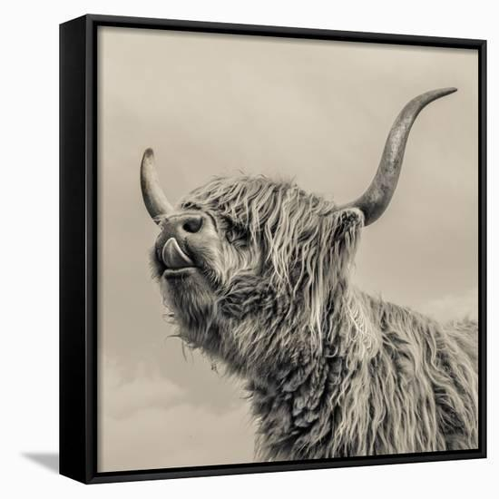 Highland Cattle-Mark Gemmell-Framed Canvas Print