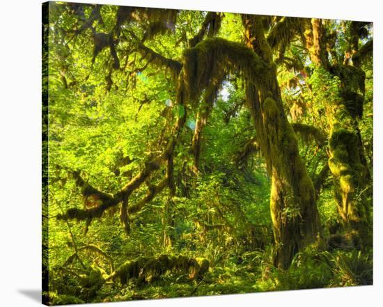Hoh Rain Forest I-Richard Desmarais-Stretched Canvas Print