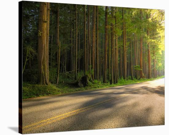 Hoh Rain Forest, Upper Hoh Road-Richard Desmarais-Stretched Canvas Print
