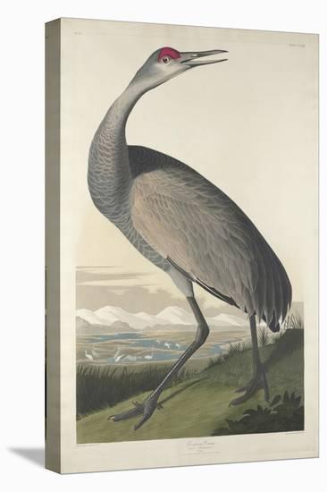 Hooping Crane, 1835-John James Audubon-Stretched Canvas Print