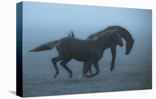 Horses In The Fog-Allan Wallberg-Stretched Canvas Print