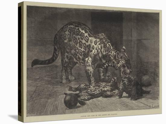 Jaguar and Cubs at the Jardin Des Plantes-Auguste Andre Lancon-Stretched Canvas Print