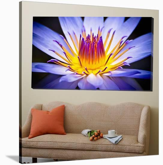 Kew Gardens Waterlily-Nick Jackson-Loft Art