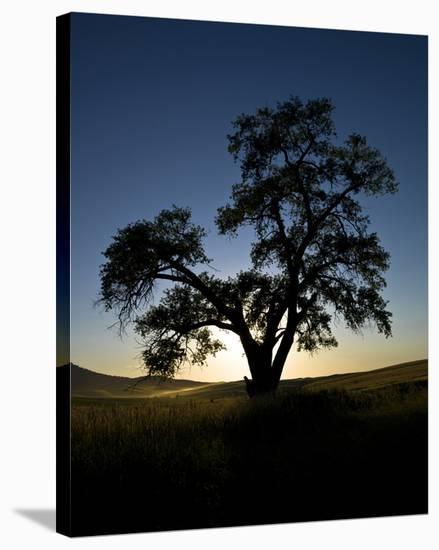 La Palouse Steptoe Tree Silhouette-Richard Desmarais-Stretched Canvas Print