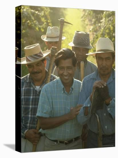 Labor Activist Cesar Chavez Talking in Field with Grape Pickers of United Farm Workers Union-Arthur Schatz-Stretched Canvas Print
