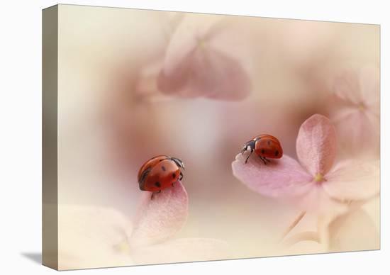Ladybirds On Pink Hydrangea.-Ellen Van Deelen-Stretched Canvas Print