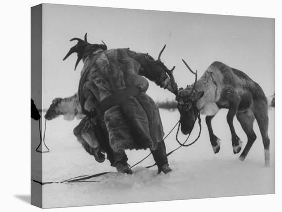 Lapp Struggling to Harness One of His Reindeer-Mark Kauffman-Stretched Canvas Print