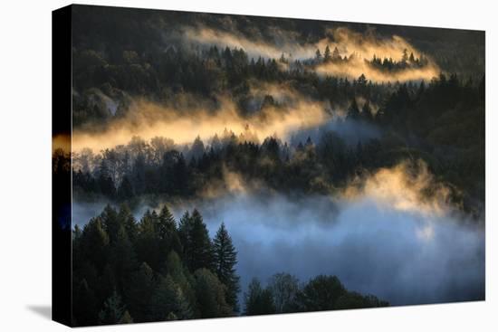 Light & Fog Wonderland Abstract Mount Hood Wilderness Sandy Oregon Pacific Northwest-Vincent James-Stretched Canvas Print