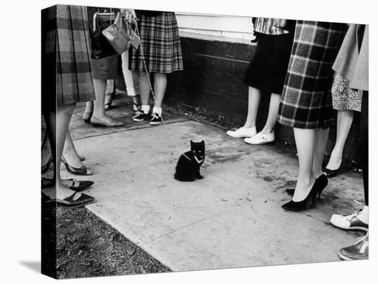 "Little Black Kittens Waiting for Audition for Movie ""Tales of Terror"" in Hollywood-Ralph Crane-Stretched Canvas Print"