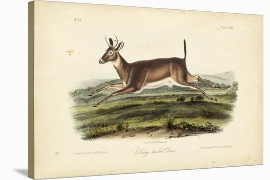 Long-tailed Deer-John James Audubon-Stretched Canvas