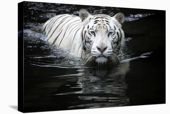 Looking At Me Looking At You-Renee Doyle-Stretched Canvas Print