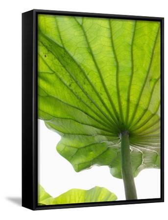 Lotus Leaf Texture-Michele Molinari-Framed Canvas Print