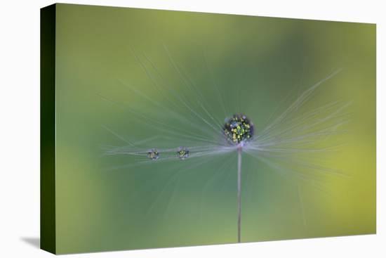 Magic Bunch-Bertrand Kulik-Stretched Canvas Print