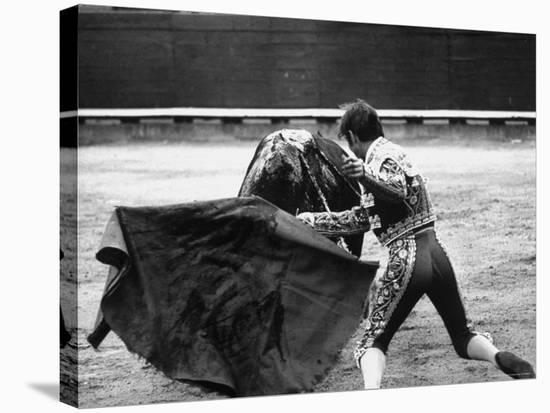 Matador Manuel Benitez, Performing in the Bullring-Loomis Dean-Stretched Canvas Print