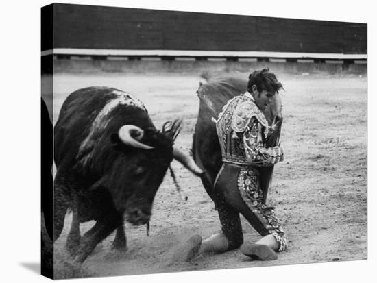 Matador Manuel Benitez, Performing Series of Passes on His Knees-Loomis Dean-Stretched Canvas Print