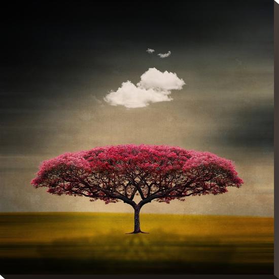 Medusa Cloud-Philippe Sainte-Laudy-Stretched Canvas Print