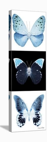 Miss Butterfly X-Ray Pano-Philippe Hugonnard-Stretched Canvas Print
