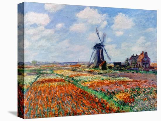 Monet: Tulip Fields, 1886-Claude Monet-Stretched Canvas Print