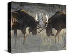 Moose Challenge-Terry Isaac-Stretched Canvas