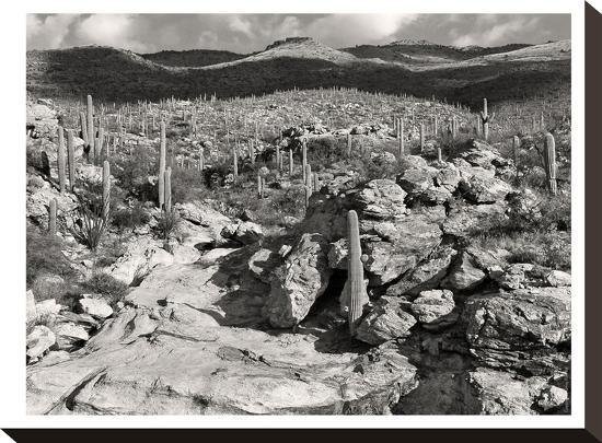 Morning Desert Vista B+W-Murray Bolesta-Stretched Canvas Print